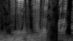 shall we enter or rather not? (lunaryuna) Tags: scotland davawalk woods trees black white blackwhite bw thespiritoftrees mood sinister