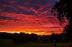 Spectacular sunset (SimonLea2012) Tags: manualexposure d7000 nikon westmidlands smethwick warleywoods uk excitement silhouette woods park red gold dusk light colour drama fire sky sunset