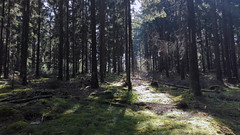 IMG_20160924_131756 (FranktIstAuchNurEinName) Tags: nature natur wald woods forest trunk trunks treetrunks light walk