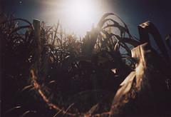 (canovix) Tags: plantas sol acostado entre la hierba