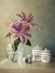 ... (pimontes) Tags: pimontes still life bodegn hss flor color rosa