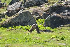 DSC_3651 (d90-fan) Tags: rauris raurisertal natur alpen salzburgerland österreich nationalpark npht hohe tauern wandern krumltal seidlwinkeltal