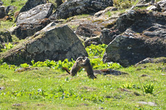 DSC_3651 (d90-fan) Tags: rauris raurisertal natur alpen salzburgerland sterreich nationalpark npht hohe tauern wandern krumltal seidlwinkeltal