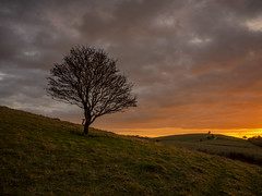 Hillside Splendor (Damian_Ward) Tags: sunset tree landscape lumix evening sundown chilterns buckinghamshire panasonic redsky grad bucks dmc pitstone m43 thechilterns chilternhills mft gnd gh3 1445mmlens leefilters pitstonehill damianward micro43 microfourthirds hfs014045 soft06 ©damianward