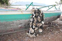 Filet capteur à agar-agar (GeckoZen) Tags: indonesia ria algues sumbawa agaragar seaseed
