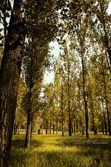 Golden Woods (Scott Whiteman) Tags: road trip trees grass leaves drive golden woods nikon bricks winery hut nsw whiteman cessnock wollombi sjr nikonlife d7000 nikond7000 visitnsw sjrcreativeimages