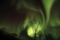 Aurora21 (vic_206) Tags: light luz norway noruega northernlights borealis tromso auroraboreal canoneos60d tokina1116