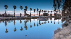 Lake Tuendae at Zzyzx California (joeqc) Tags: california ca tree clouds canon palm mojave springer zzyzx preserve 6d mnp ef24105f4 canoneos6d
