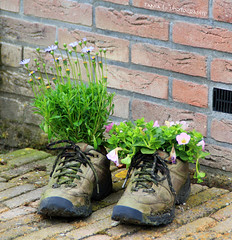 Second Life (grce) Tags: flowers plants holland netherlands boots sneakers