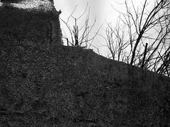 Hidden from View 1 (Rossdxvx) Tags: trees blackandwhite plant abstract tree art texture nature silhouette woods rust shadows michigan metallic surrealism lofi surreal textures minimalism stark textured