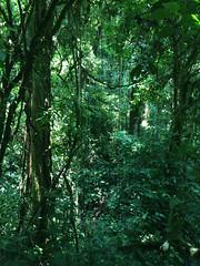 "La Réserve de Monteverde <a style=""margin-left:10px; font-size:0.8em;"" href=""http://www.flickr.com/photos/127723101@N04/26339789334/"" target=""_blank"">@flickr</a>"
