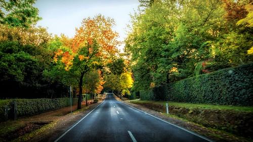 Mt Macedon Autumn Colours-14