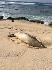 IMG_0503 (Ourisman Travel) Tags: hawaii maui wailea hotelwailea