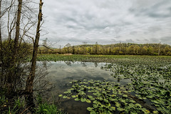 Killbuck Swamp (John_Leu) Tags: ohio swamp wetland holmescounty killbuck fujifilmxpro2