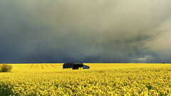 Passing Storm at Sixpenny Handley (mpelleymounter) Tags: yellow clouds barn landscape spring bluesky dorset canola rapeseed dutchbarn rapeseedoil sixpennyhandley dorsetlandscape markpelleymounter