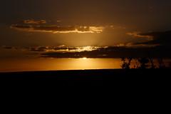 Absolutely Perfect Sunset Addo (markdescande) Tags: africa road park travel wild sky elephant green tourism nature grass animal landscape southafrica addo outdoor african background wildlife south reserve safari dirt national naturereserve environment easterncape kruger gamereserve addoelephantnationalpark zaf