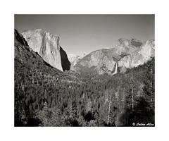 Yosemite Valley 2016 (Daiku_San) Tags: blackandwhite bw film landscape ishootfilm yosemite halfdome 4x5 yosemitenationalpark elcapitan bridalveilfalls largeformat yosemitevalley speedgraphic tunnelview ilfordfp4 kodakektar12747 ektarlens epsonv750mpro bwfp