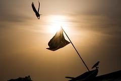 Lifting off (Karthikeyan.chinna) Tags: street travel india black nature birds silhouette sunrise canon boat action candid flag 5d canon5d crow chennai tamilnadu kovalam karthikeyan chinna chinnathamby