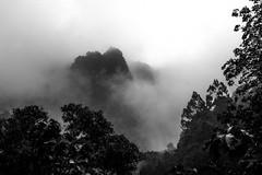 mist and forest (WegZ Photography) Tags: bw cloud mist rain fog forest thailand simple