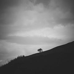 On a Slope (ChrisDale) Tags: blackandwhite cloud mountain tree forest mono hill lakedistrict cumbria keswick slope lonetree castlerigg chrisdale chrismdale