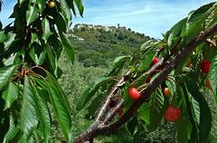 Andando per ciliegie - Going for cherries (Jambo Jambo) Tags: italy panorama primavera landscape countryside spring cherries italia campagna tuscany toscana grosseto maremma ciliegie montegiovi casteldelpiano maremmatoscana jambojambo sonydscrx100 maremmacountryside agriturismololivastra lolivastra