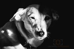 Tilly (lisadavies50) Tags: blackandwhite dog pet petportrait