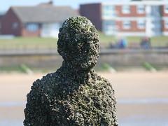 DSCF0684 (SierPinskiA) Tags: sea shells beach liverpool sand ironman pools barnacles ironwork mayday seashore merseyside anthonygormley irishsea 2016 anotherplace crosbybeach blundellsands fujixs1
