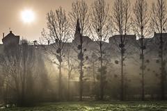Soleil levant (Bertrand Thifaine) Tags: silhouette lumire hiver arbres rayons ombres aube soleillevant mauges montrevault