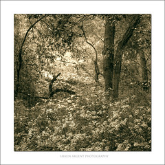 Wild (shaun.argent) Tags: flowers trees tree texture nature woodland spring woods flora seasons wildflower shaunargent