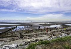 Tide and school going out (Tony Tomlin) Tags: ocean sea canada britishcolumbia crescentbeach lowtide southsurrey crescentbeachbc