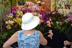 2016-07-23 08787 Orchid Show, SF County Fair Bldg (Dennis Brumm) Tags: sanfrancisco california july 2016 orchids exposition flowers plants bromeliads