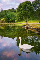 Lindy, Norway (Vest der ute) Tags: trees seascape norway clouds reflections landscape mirror swan rogaland fav25 g7x ryksund