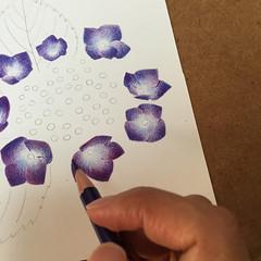 2016_07_02_hydrangea_01 (blue_belta) Tags: hydrangea coloredpencil drawing 色鉛筆 花 あじさい