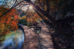 chose (your way) (Rainer Schund) Tags: chose your way nikon nikond700 natur nature natureexploring naturemasterclass krka kroatien water wasser herbst bume three wald forest