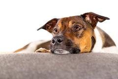 Dog-Hund (AndiFotoGrafie) Tags: hund dog studio heimstudio homestudio outdoor drausen indoor drinnen lustig jungtiere tier tiere