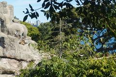 Mountain goats at the Taronga Zoo in Sydney (Mister Bunny) Tags: australia sydney tarongazoo zoo mosman newsouthwales au goats mountaingoats