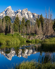Tetons Reflected on the Snake River Below a Beaver Dam (grimeshome) Tags: tetons tetonslandscaape teton tetonnationalpark grandtetonnationalpark grandteton grandtetonpeak snakeriver grandtetonsnationalpark reflection reflectioninwater reflectiononwater reflections wetreflection nature wilderness mountain mountains mountainpeak river water beautiful landscape landscapebeautiful landscapes beaverdam beaver