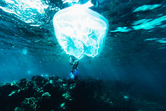 Jellyfish man by Davide Albani - EYEGOBANANAS collective