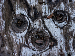 Funny Face (prima seadiva) Tags: 20th centraldistrict pareidolia plywood weathered pattern