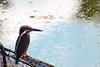 2016 Kingfisher #1 (Yorkey&Rin) Tags: 10月 2016 autumn bird em5 japan kingfisher machida october olympus olympusm75300mmf4867ii rin ta022246 tokyo yakushiikekouen カワセミ 秋 町田市 東京都 薬師池公園