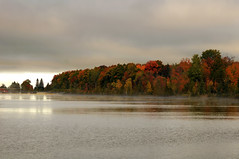 "Play ""Misty"" For Me (thepoocher7) Tags: misty water river ripples reflections fall fallcolours autumn autumncolours dam gree orange red yellow pretty lovely peaceful trees maples elms birch spruce pine overcast cloudy firstlight earlymorning dawn ontario canada gorgeous"