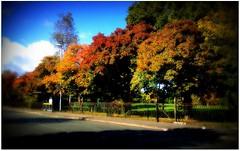 (Riik@mctr) Tags: red yellow purple black orange pink magenta blue brown autumn leaf bursting colour nokia n95 cell fone phone outdoor serene