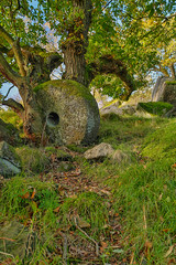 Abandoned (RD400e) Tags: canon eos 5d mk3 zeiss distagon t f2821 ze bwpolariser gitzo millstone tree autumn derbyshire peakdistrictnationalpark padley gorge abandoned outdoors