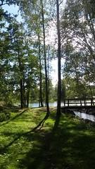 Finlandia - 3 (La minina) Tags: finlandia isolotto bosco lago natura estate finland outdoor wood trees lake nature summer