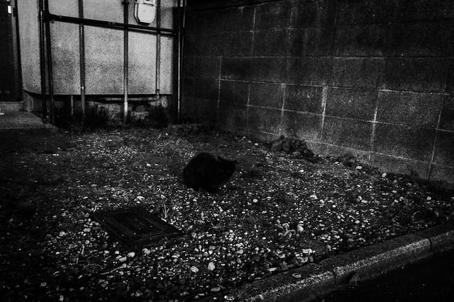 Today's Cat@2014-11-15