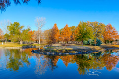 JVP_20141125_ClarkGardens_4006-2 (TheFathersCreations) Tags: flowers fall nature gardens canon landscape photography geese texas lakes pavilion paths blueskies fountains ponds lanes 2014 weatherford oxbowlake mineralwells cooltexas clarkgardens pavilionlake canoneos6d sightsaroundtexas godslittlebitofheavenintexas judyvalentinephotography
