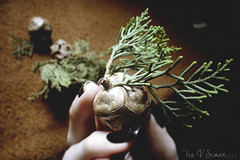 Every huge accomplishment starts with a little step II (unterihremkissen) Tags: brown nature hand seeds myphotography brownvintage
