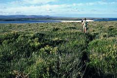 Walking across Endeavour Moor, Nadgee, 1985 (NettyA) Tags: summer film 35mm australia slide coastal bushwalking nsw scanned newsouthwales kodachrome 1986 1985 scannedslide farsouthcoast nadgee nadgeenaturereserve nadgeelake endeavourmoor