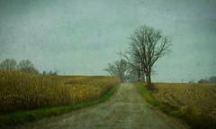 Between (bill.d) Tags: usa cold wet rural landscape michigan unitedstatesofamerica overcast dirtroad wayland countryroad damp ruralmichigan allegancounty