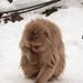 Snow Monkey Park, Nozawaonsen